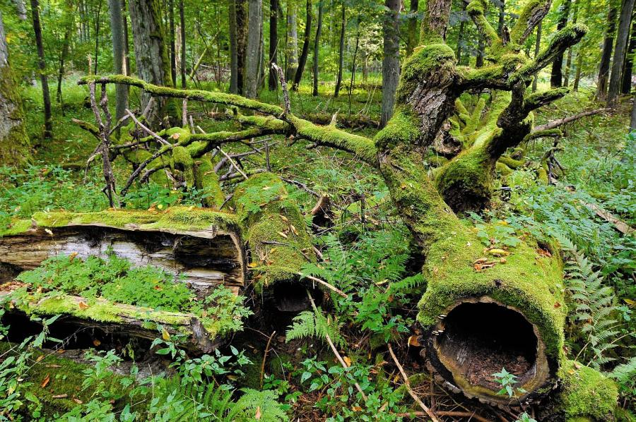 Naturalna ewolucja środowiska przyrodniczego